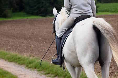 Pferd mit Reiter