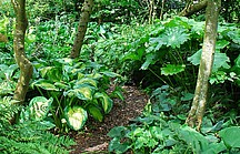 Rindenmulchweg mit grünen Schattengewächse