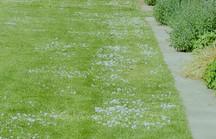 Grüne Rasenfläche mit Betonkante