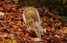 Eichhörnchen steht auf Laubboden