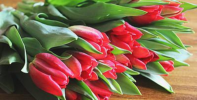 Rote Tulpen die auf dem Tisch liegen