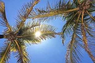 Sonne scheint durch Palmenblätter