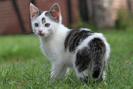 Schwarz-weiße Katze, die sich verlaufen hat