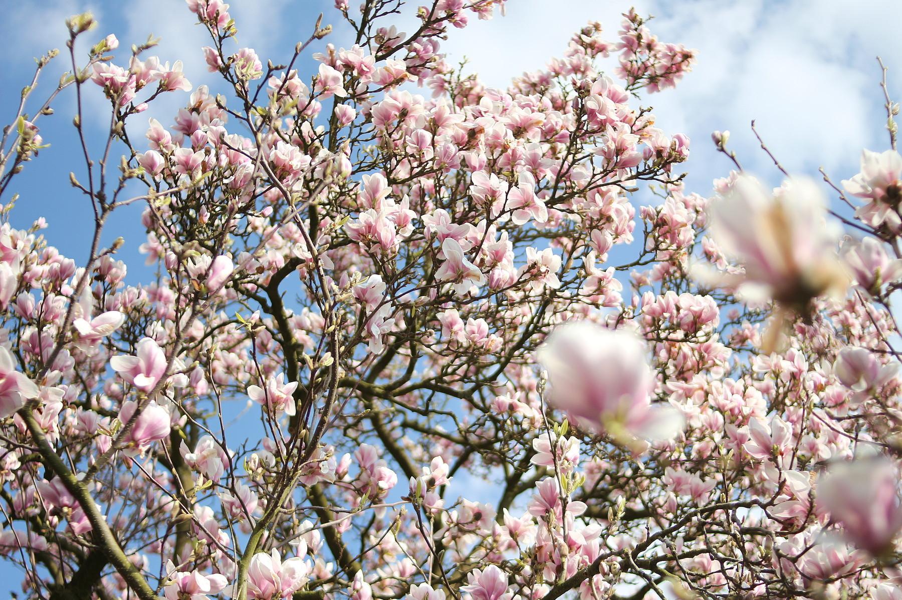 Tipps zur Pflege von Bäumen, Sträuchern und Stauden