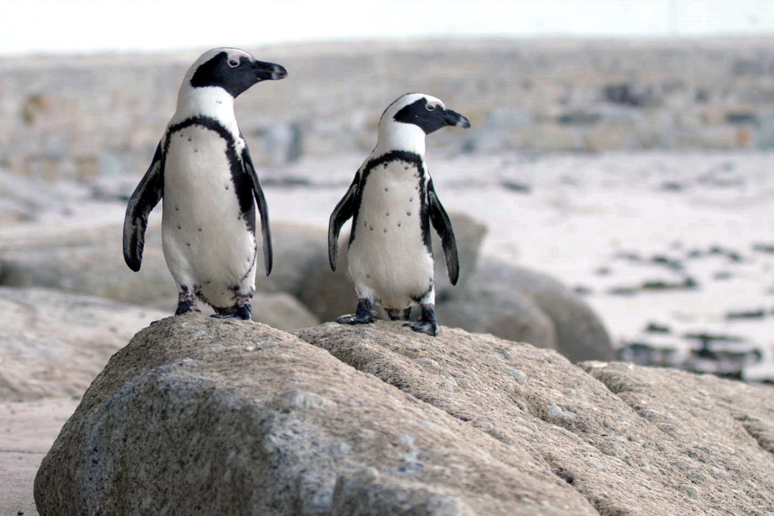 streaming-review-pinguine-netflix