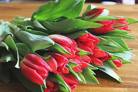 Rote Tulpen die auf einem Tisch liegen
