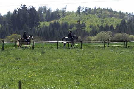 Zwei Frauen auf zwei Pferden reiten an einem Zaun auf einer grünen Wiese entlang